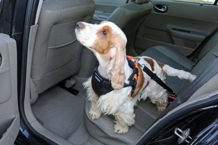 Szelki samochodowe dla psa rozmiar L Pomarańczowe