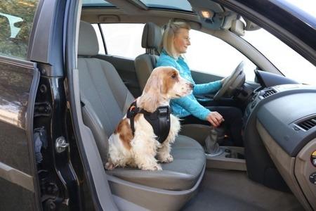 Szelki samochodowe dla psa rozmiar M Czarne