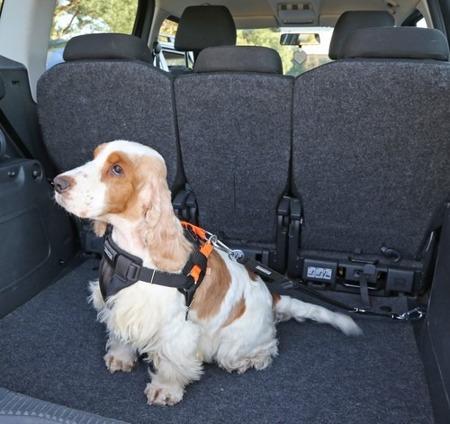 Szelki samochodowe dla psa rozmiar XS Pomarańczowe